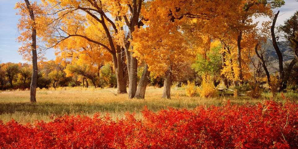 Field and trees with fall colors